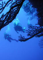 Explore an underwater reef